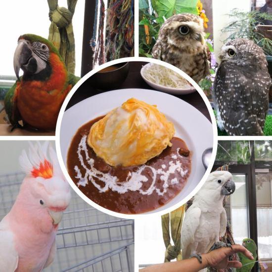 食事にもこだわった鳥カフェです★お気に入りの子を探しに来てください♪