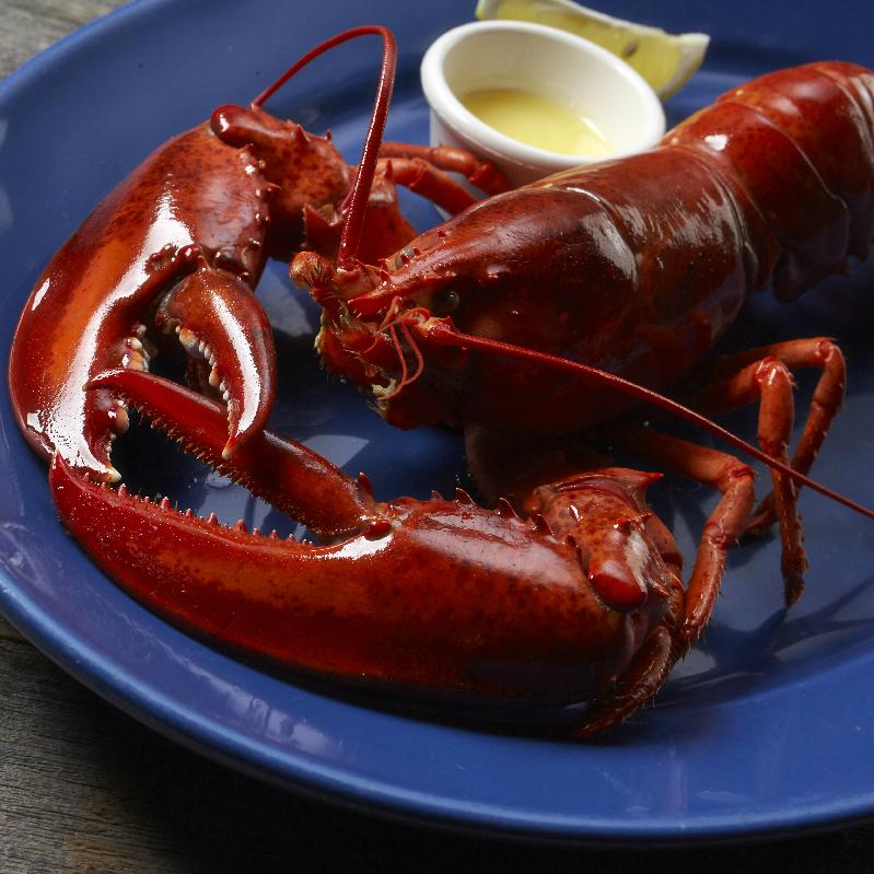 ライブロブスター(スチーム) R(レギュラー) Live Lobster (Steamed)  Regular