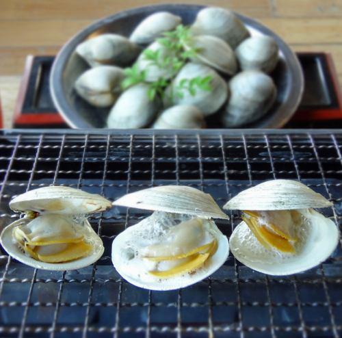 千葉県産白はま(ホンビノス貝)