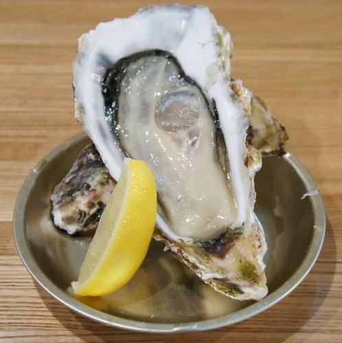 石巻産生牡蠣