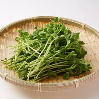 Bean seedlings