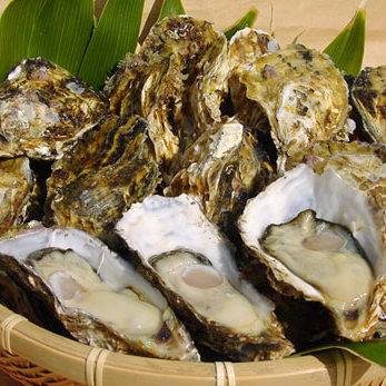 [Oyster] raw oyster / oysterfly / steamed oyster
