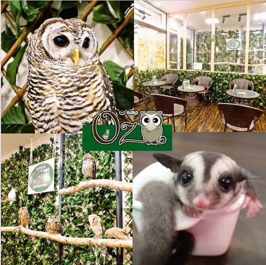 Asakusa Station 3 minutes on foot! Owls and hedgehogs suddenly appear in the city, cafes that can interact with rabbits