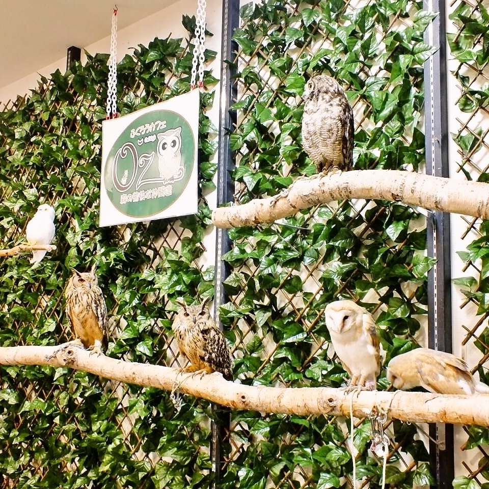 A cafe you can play with your owl!